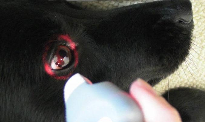 animal_occhio